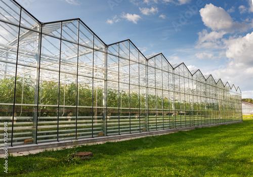Staande foto Industrial geb. greenhouse vegetable production