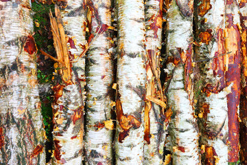 Close up of wooden logs from birch tree.