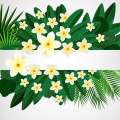 Floral design background. Plumeria flowers.