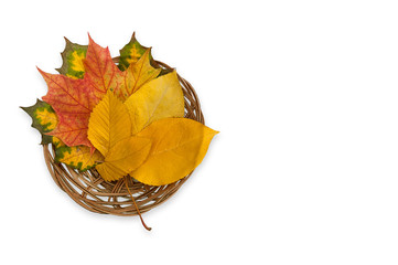 Autumn composition with maple and elm leafs in the wicker