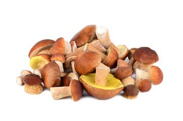 King boletus mushrooms