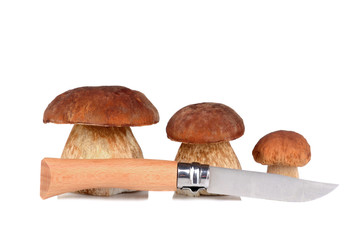 Tree mushrooms with knife