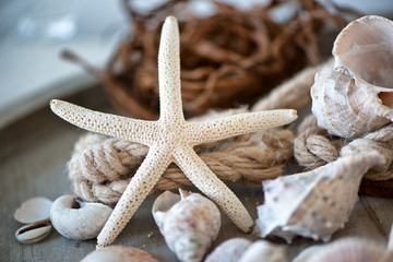 Still Life of Starfish Amongst Seashells with Rope