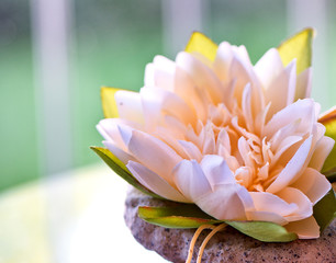 Close Up of Pink Lotus Water Lily Flower