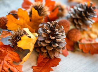 Close Up of Pinecone Amongst Autumn Leaves