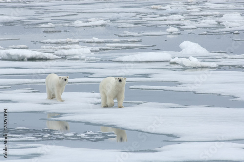 Fototapeten Eisbar Polar Bear with Yearling Cub