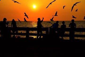 people taking photo of seagull in the evening
