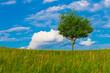 albero primavera