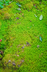 Moss / lichen / Green Nature