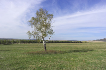 Beautiful landscape with lonely birch