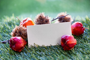 Blank Place Card with Chinese Lantern Seed Pods