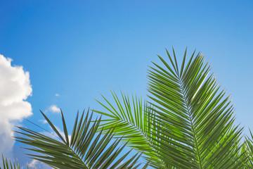 palm under clouds