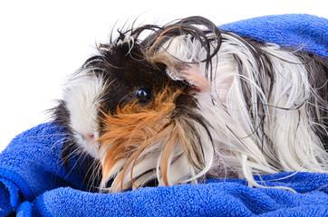 Cute pet after bath