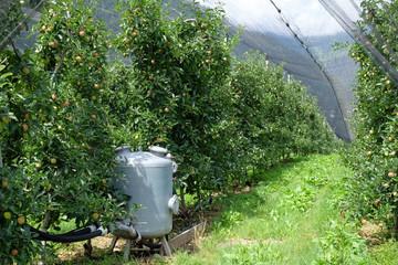 Wasserverteilung Obstplantage
