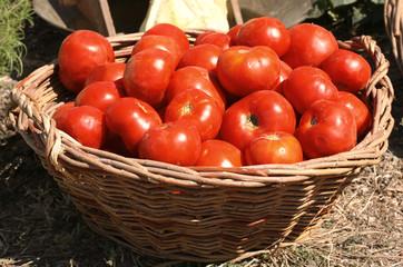 Корзинa с красными помидорами на грядке.