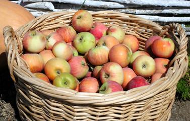 Корзинa с яблоками на улице.