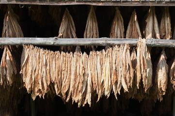 driedTobacco