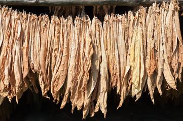 tobaccoLeaves