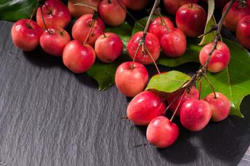 paradisaical apples
