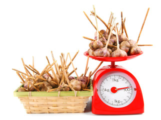 Garlic on scales and in a basket