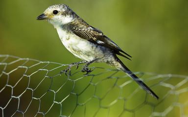 kuş bakışları