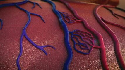 Artery, vein