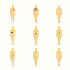 Human figures with internal organs