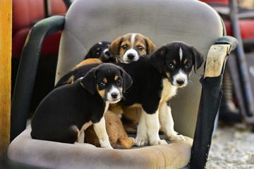 sevimli bakışlar&tatlı köpekler