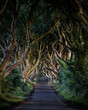 The Dark Hedges - 70274273