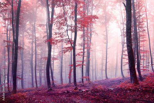 Fantasy autumn color forest