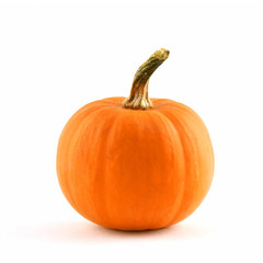 Ornamental miniature pumpkin