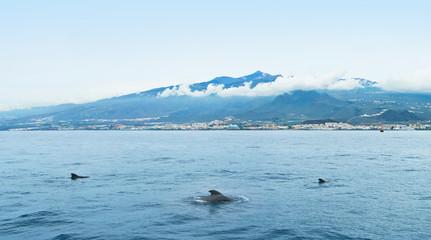 three dolphins in sea near island