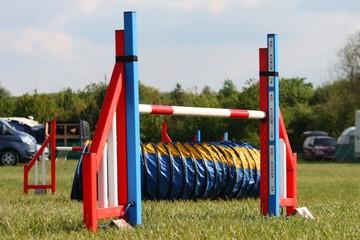 a brightly coloured dog agility sport jump