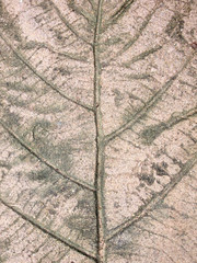 marks of leaf on the concrete pavement
