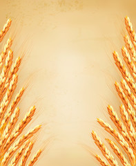 Ears of wheat on old paoer. Vector illustration