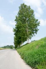 舗装された田舎道