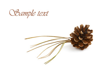 Lodgepole pine cone and needles