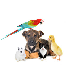 different animals: dog, cat, rabbit, parrot