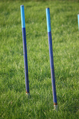 blue agility weave pole items of equipment for dog sport
