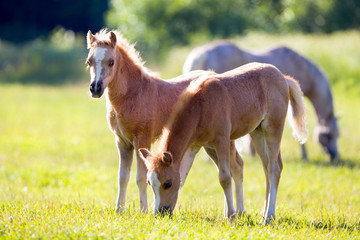 Two small foals in field