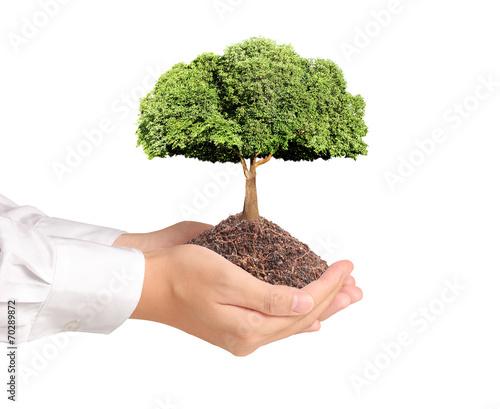 Fotobehang Bonsai Tree in hand