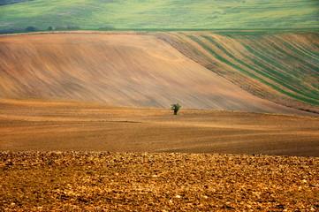 Morawy, Czechy , barwy ziemi po orce