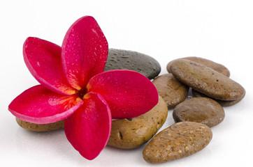 spa concept massage stones with frangipani plumeria flower