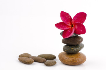 spa concept massage stones with frangipani plumeria flower