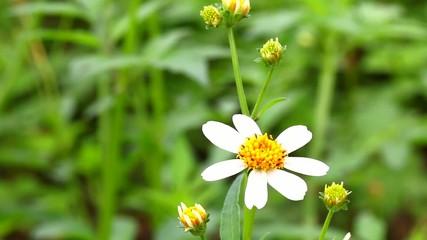 grass flower in sunlight
