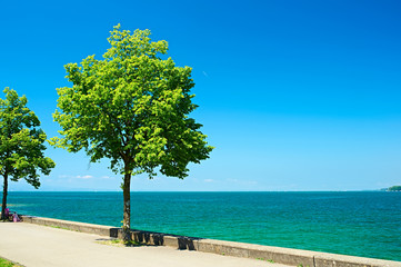 Trees by Lake Constance at Germany