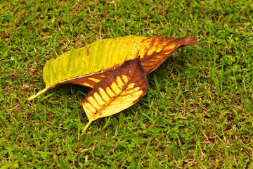 the leaf on grass