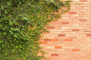 green creeper plant on brick wall