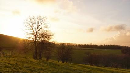 Sunset over Goodwood