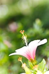 lovely flower in garden